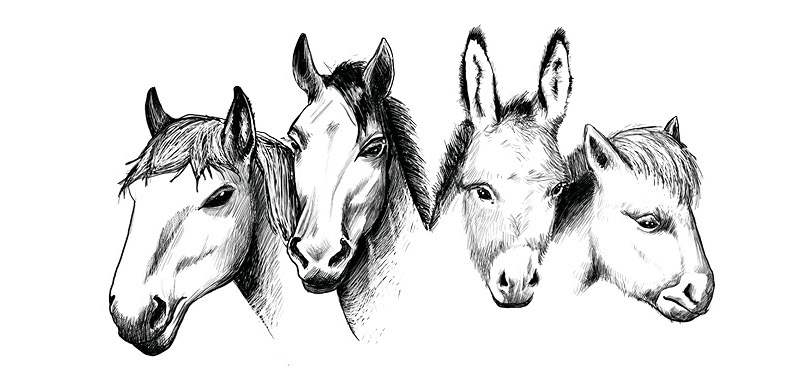 dessin-animaux-gravure-illustration-chevaux-equitation-departement-comice-trophee-agricole-sarthe
