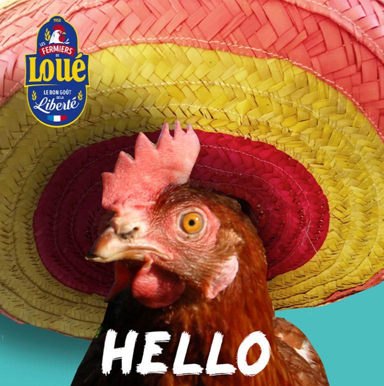 sombrero-poule-graphiste-loue-poule-hello